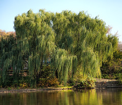 Weeping Willow.. (zoomclic) Tags: canon colorful tree water river bluesky reflections nature outdoors peaceful serene zoomclicphotography canoneos5dmarkii ef24105mmf4lisusm weepingwillow saveearth