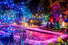 Festival of Lights 2016 (2) (littlekiss☆) Tags: festivaloflights holidayseason illumination nightscape night winter christmas christmaslight vancouver vandusenbotanicalgarden littlekissphotography