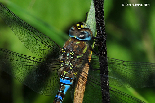 Migrant Hawker 152080gb