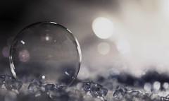 bubble  ( see through) (Debbie Leach 2016) Tags: sparkle dof bubble flickrfriday seethrough