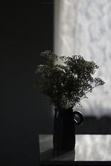 (esmeecadoni) Tags: winter europe netherlands beautifulearth sony indoor simplicity simple minimal minimalistic light littlethings holland photography bokeh flower stilllife still backlight nature window