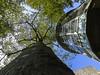 生意盎然 (stevenking9987) Tags: tree travel sigma nikon sky blue landscape photography taiwan taichung