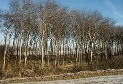 Naked trees (René Maly) Tags: renémaly minolta vectis vline 2280mm rd3000