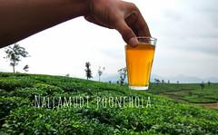 Nallamudi Poonchola (jacoblukose) Tags: kerala valparai teaestate tea leaf nature green plantation