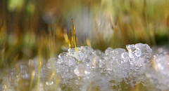 melting snow (bugman11) Tags: snow winter ice macro moss flora canon bokeh 100mm28lmacro nature nederland thenetherlands haarlem