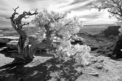 Half and Half (Neal3K) Tags: canyonlandsnationalpark utah ir infraredcamera bw blackandwhite kolarivisionmodifiedcamera desert desertplants vista scenic