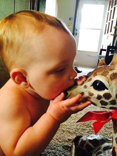 Giraffe kisses 💜 #day325