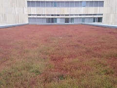 162/365 Green roof gone red