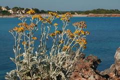 Playa Son Xoriguer (SergioBarbieri) Tags: costa mare cielo fiori roccia scogli baia macchiamediterranea