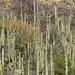 Uma grande variedades de cactus