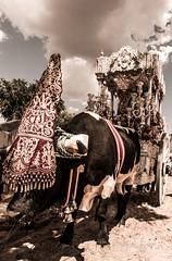 AE5D0739 (alonsoesparterofoto) Tags: caballo alma imagenes alonso rocio ermita bombo flamenca buey flauta gitana romeria campero botos tamboril bueyes rociero carriola simpecado tamborilero espartero rociera gibraleon sinpecado alonsoespartero