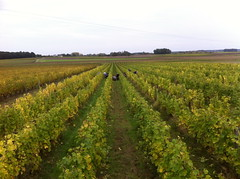 "Hand Picking Oisly Vineyard 2013 • <a style=""font-size:0.8em;"" href=""http://www.flickr.com/photos/133405556@N08/20084379881/"" target=""_blank"">View on Flickr</a>"