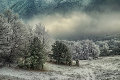 Frozen trees (Krasi St Matarov) Tags: winter workshop snow tree landscape bulgaria outdoor nikon mountains mountain pirin phototour adventure fog forest frozen clouds nature