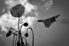 POP0050 (Smart Aviation Art) Tags: poppy poppies poppyfield poppyfields lancaster vulcan avro spitfire hurricane aircraft military bbmf