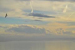 Biscarrosse plage #mouette#biscarrosse#plage#ocean#good#moment#family#hollidays (leamalandit) Tags: mouette biscarrosse plage ocean good moment family hollidays