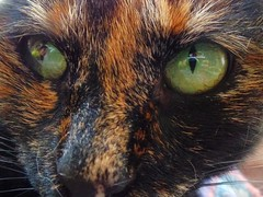 Cat's Eye, by Margaret Atwood (Lenaprof) Tags: 7daysofshooting week27 abooktitle macromonday