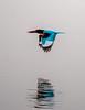 Sholinganallur (Velachery Balu) Tags: birding chennai pallikaranaimarsh birds cormorants egrets kingfisher migratorybirds paintedstorkpelicans sholinganallur