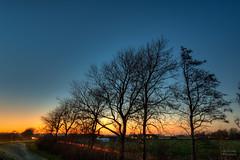 A couple of trees watching the sunset. (Alex-de-Haas) Tags: 1635mm d750 dutch grebpolder hdr holland hollandseluchten nederland nederlands netherlands nikkor nikkor1635mm nikon nikond750 noordholland warmenhuizen avond beautiful bomen boom calmweather clearsky daglicht daylight dusk evening flat hemel highdynamicrange kalebomen landscape landschap leavelesstrees licht light longexposure lowlight lowlightconditions lucht mooi onbewolkt polder schemer schemering skies sky sunset tree trees vlak weather weer winter winteravond zonsondergang