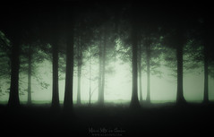 El bosque oscuro (Mimadeo) Tags: forest dark creepy scary night fog horror nature woods light moonlight halloween spooky mysterious mist fantasy tree foggy eerie evil mystery misty nightmare shadow fear gloomy landscape gothic