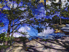 IMG_9282  Trees  ©2016 Paul Light (Paul Light) Tags: dxpapp delraybeach florida morikamimuseumandjapanesegardens altered composite multilayer multipleexposure outdoors outside park shadows trees