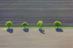 4 Trees (Aerial Photography) Tags: by don sch 21042007 5d018849 bauernmalerei baum baumreihe birkhausen braun bäume erde feld feldweg fotoklausleidorfwwwleidorfde grün landschaft landwirtschaft laubbaum linie luftaufnahme luftbild reihe schatten streifen vgwallerstein vier wallerstein aerial agriculture alignment brown deciduoustree earth farmerspainting field foliagetree four green landscape leaftree line lineoftrees outdoor row rowoftrees shadow soil tree trees verde wallersteinlkrdonauries bayernbavaria deutschlandgermany deu