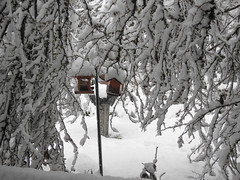 Heavy Limbs & Feeder - Snowpocalypse 2017_16