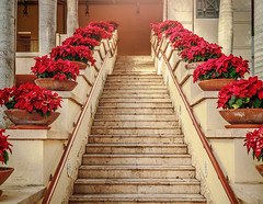 Stairs at Merrick Park with flower pots. (katcheika) Tags: merrickpark flowers stairs staircase decoration christmas mall miami florida village garden penf olympus lumix