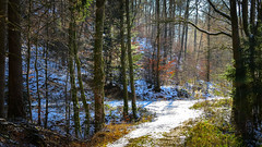 sun and frost (All Shine) Tags: landscape winter snow frost forest path light colors nature