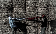 * tied to you (Taran W) Tags: hay light shadows red white fabric tied together tethered people portrait