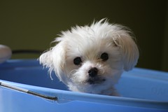 My little guy Sox (-SOLO--) Tags: flickrfriday myprecious exploredonflickr explore flickrexplore