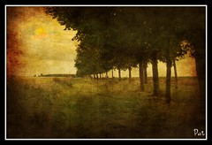 The lane (patrick.verstappen) Tags: summer texture june photo yahoo google nikon flickr belgium pat sigma imagine textured facebook picassa textuur twitter gingelom ipernity d5100 pinterest ipiccy