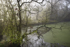 Anon (Russ Barnes Photography) Tags: mist colour spring pond nikon df backwater russbarnes sigma35mm14art