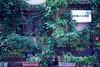 Front Yard 3 (billykitsune) Tags: japan tokyo pottedplants asakusa frontyard taitoku