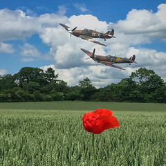 POP0035 (Smart Aviation Art) Tags: poppy poppies poppyfield poppyfields lancaster vulcan avro spitfire hurricane aircraft military bbmf