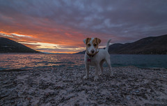 A beautiful friend at sunset (Vagelis Pikoulas) Tags: dog sun sunset porto germeno greece canon 6d tokina 1628mm view animal landscape sea seascape sky clouds cloud cloudy december 2016 winter europe