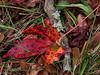 Hojas (Nancy Garza H) Tags: planta follaje airelibre bosque naturaleza rancho pinos