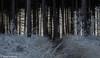 161230_007-22.jpg (Jacky Vastmans) Tags: limburg maasmechelen mechelseheide beriezen bevroren bos cold dennebomen dennen freezing frozen koud landscape landschap panorama pine sneeuw sneeuwlandschap snow snowylandscape sparren stilleven vriezen winter winterlandschap wood
