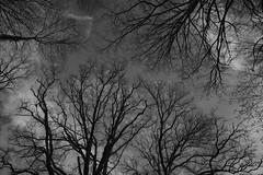 illusion de flammes (rondoudou87) Tags: pentax k1 monochrome noiretblanc noir blanc black blackwhite tree arbre parc zoo reynou sky silhouette zeissdistagont21mm28 zeiss carlzeiss nature natur