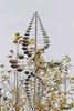 _J3A2797 7D Mark ll Tamron 150-600mm f5-6.3 Di VC USD G2 SPEEDLITE 430EXlll-RT (greaves_russell) Tags: nature animals tattoodesigns tattoos fitness travel sprint overstock people music flickr dancingwiththestars games oops bing foxnews espn cars target bestbut bolsachicawetlands wildlife jobs locations typesofclothing professions days hours minutes dog cat fish bird cow moon world earth forest sky plant wind flower amazon ocean river mountain rain snow tree sanjoaquin anzaborrego huntingtonbeach disneyland knottsberryfarm sandiego