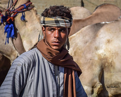 That look in his eyes.... (Nadia Rifaat) Tags: camel herder briqash market egypt cairo young man look eyes portrait street photography nikon d5300 18140mm سوق الجمال برقاش مصر