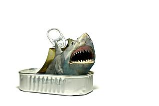 shark (brescia, italy)