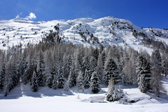 Winter in Bernina pass (annalisabianchetti) Tags: winter trees mountains montagne switzerland svizzera neve snow paesaggio berninapass