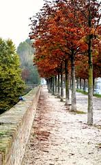 On the Walls (martinasirena) Tags: walls treviso walking italy veneto fall trees