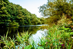 River Wear (neil955) Tags: placesuk durham riverwear nikond7200 nikon1685 landscape foliage water river