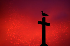 Sunrise Church Perch (imageClear) Tags: sunrise church cross perch morning dawn gull seagull bird color burst saturation bold silhouette lovely beauty telephoto aperture nikon d500 80500mm 80400mm imageclear flickr photostream picmonkeycom