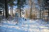 Sledging, Nuuksio National Park, Espoo, Finland (Steve Weaver) Tags: finland suomi visitfinland winter snow espoo helsinki south southern blue sky cold ice freeze freezing white family activities nature reserve national park nuuksio kirkkonummi
