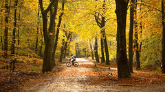 bicycle run ... (EXPLORE) (Alex Verweij) Tags: bicycle run autumn forrest herfst color colors kleur gold golden tree trees bomen boom alex verweij biker bike mountenbike explore