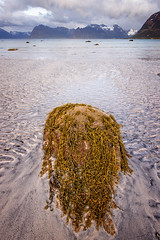 _CAH8933_edited-1 (catohansen) Tags: sea seascape rock stone landscape se seaside kelp lofoten seaview lofotenislands gimsy