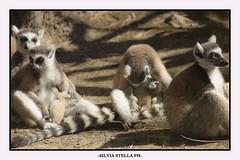 Beautiful animals (9) (stella_silvia) Tags: love nature beauty animal animals happy nice magic natura lover lovely animali mistery beautifulday animallovers