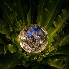 CW294 Christmas at Longwood Gardens (listentoreason) Tags: usa america canon unitedstates pennsylvania favorites places longwoodgardens ef28135mmf3556isusm score30